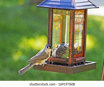 A Tufted Titmouse sits on a birdfeeder in the early morning light.