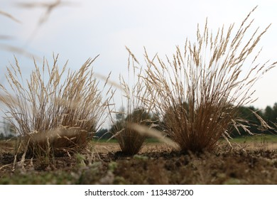Tufts of Grasses with Trees on the Background