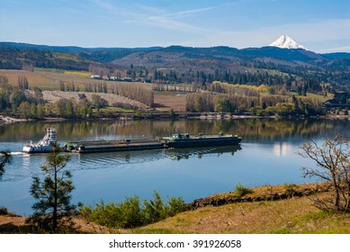 Tugboat and barges on the Columbia River near Mosier Oregon with Mount Hood and orchards in the background