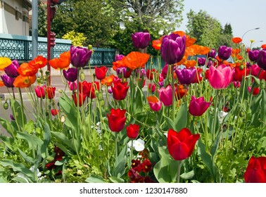 Tulip beds in town. France Flowers in the city in the summer.