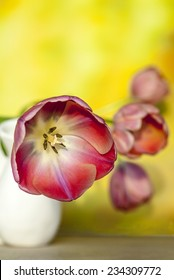 Tulip blooms on yellow background with room for copy space.