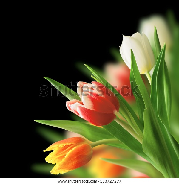 tulip bouquet on a black background