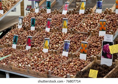 Tulip bulbs in Amsterdams flower market