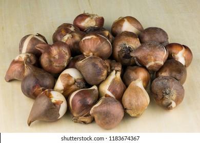 Tulip bulbs piled on a wooden table top