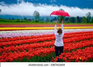 Tulip festival in Fraser Valley near Chilliwack.  Woman with red unbrella in colourful tulip fields. Vancouver, British Columbia.  Canada