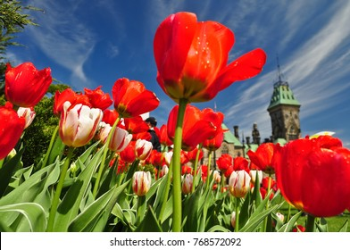 Tulip Festival in Ottawa, Canada. Canadian Parliament Building is on the background.