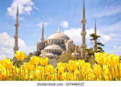 Tulip Festival in Sultanahmet Square and Blue Mosque, Istanbul