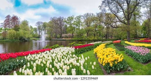 Tulip flower bulb field in Keukenhof Garden, Panorama spring season in Amsterdam Netherlands