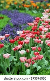 Tulip flower garden background