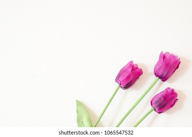 Tulip flower on white background,space for text.flower made form fabric.Crafts