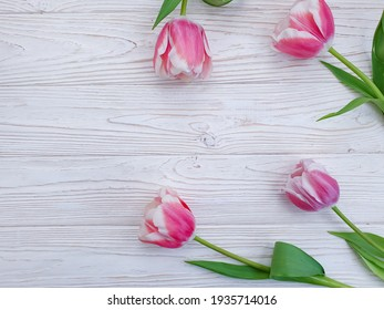 tulip flower on wooden background frame springtime