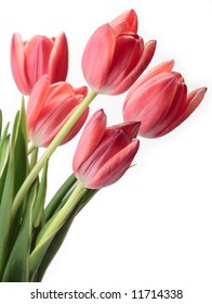 tulip flower spring isolated pink green bouquet