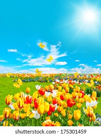 tulip flowers in green grass. spring landscape with butterflies and sunny blue sky