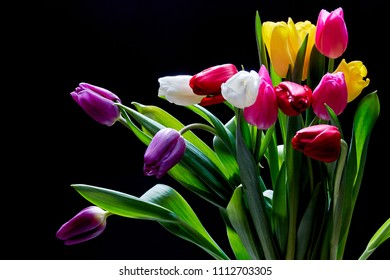 Tulip flowers isolated on a black  background