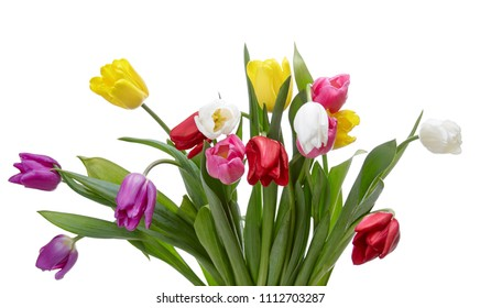 Tulip flowers isolated on a white background