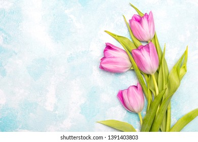 Tulip flowers on blue  background, copy space. A beautiful spring bouquet of pink flowers