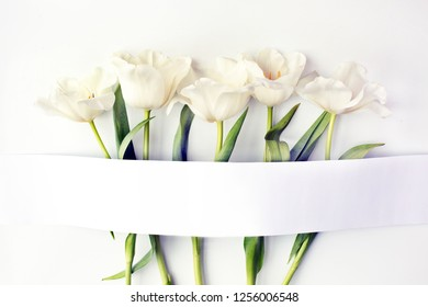Tulip flowers over white background