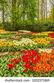 Tulip flowers in the park Keukenhof flower garden, Holland