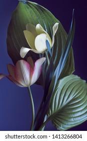 tulip and garden foliage, close-up, studio lighting.