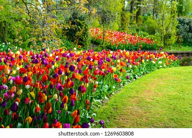 Tulip garden in Lisse, Netherlands