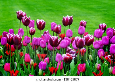 Flower Bed With White Flowers Images Stock Photos Vectors