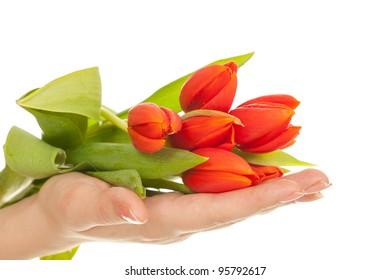 Tulip in hands