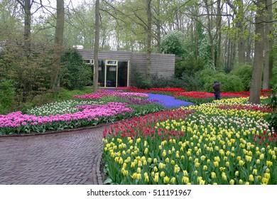 Tulip in the nice garden, colorful tulip