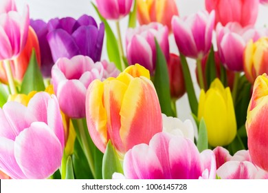 Tulip. Spring flowers background bunch of colorful flowers