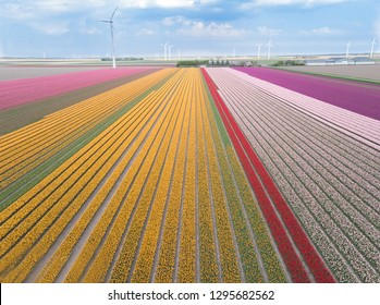 Tulips from the air in Holland