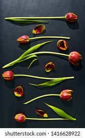 Tulips arranged in a pattern on black background.