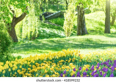 Tulips in the beautiful green sunny park