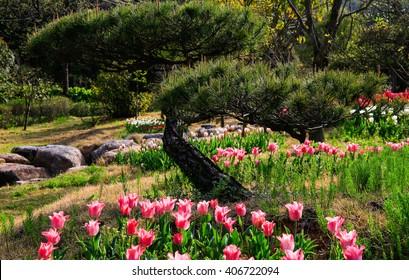 Tulips bloom Park