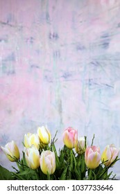 tulips bouqet against a matching pink colored background with copy space