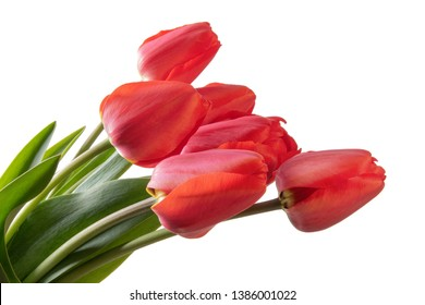 Tulips bouquet isolated on a white background