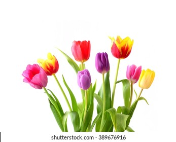 Tulips. Bouquet of red, yellow and pink flowers isolated on white. Holiday background with copy space.
