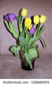 Tulips bouquet in vase