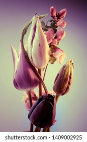 tulips and branch with flowers, vertical bouquet, graded background.