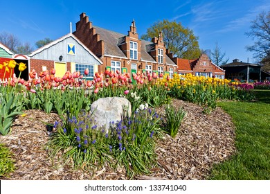 Tulips burst from the ground at Windmill Island Villiage in Holland Michigan. The gardens are vivid with color during the annual Tulip Time Festival