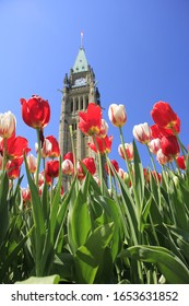 Tulips at Canadian Parliament Building