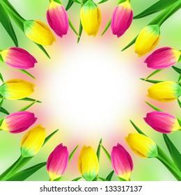 Tulips circle frame