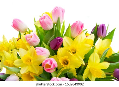 tulips and daffodils flowers isolated on white background