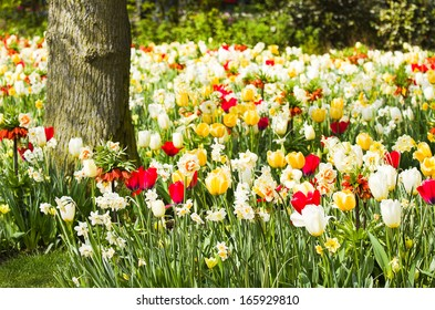 Tulips, daffodils and Imperial Crowns blooming under a tree in spring - horizontal