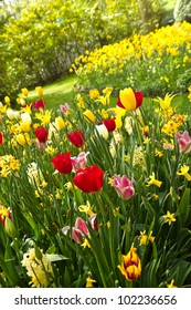 Tulips and daffodils in lots of colors arrangement  in park in spring