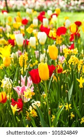 Tulips and daffodils in lots of colors in park in spring