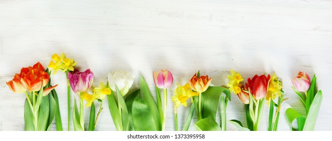 Tulips and daffodils on white wood, header, headline, copy space