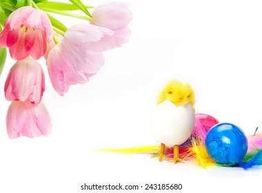 Tulips, Easter eggs, Easter chicks