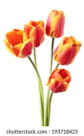 Tulips. Five red-yellow flowers on a white background