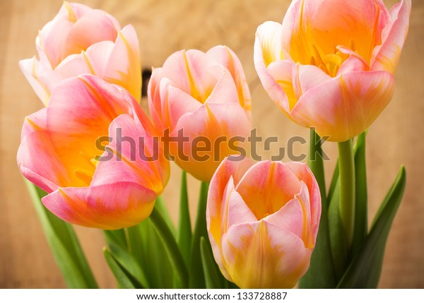 Tulips, floral background.