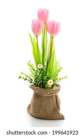 Tulips flower isolated on white