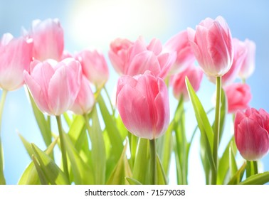 tulips flowers on blue sky and sun